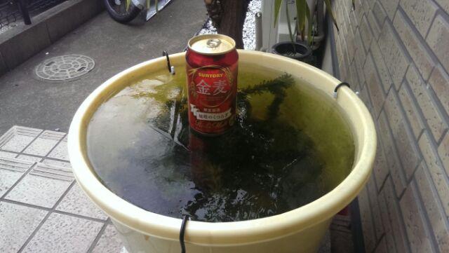 屋外水槽、ガッツリ結氷(^_^;)